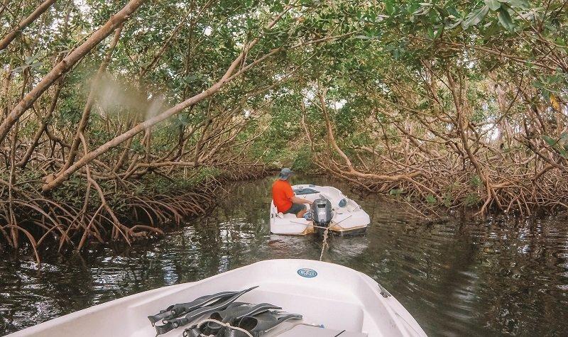sainte rose mangrove