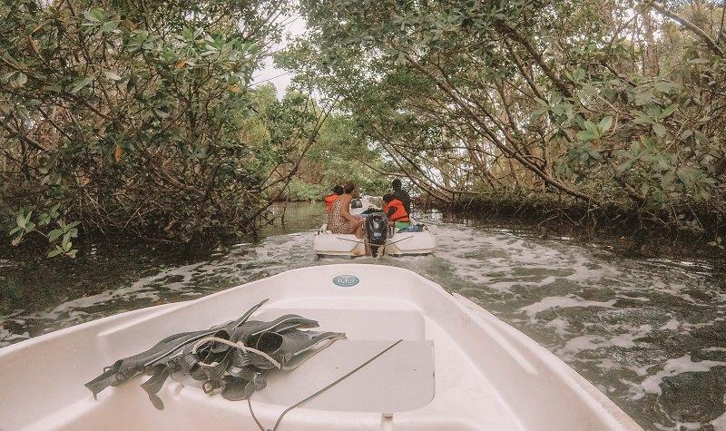 mangrove sainte rose