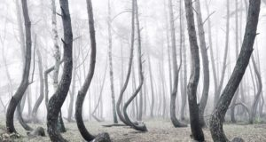 foret tordue