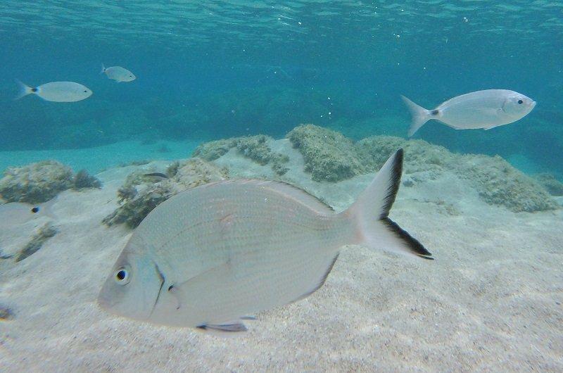 snorkeling iles lavezzi