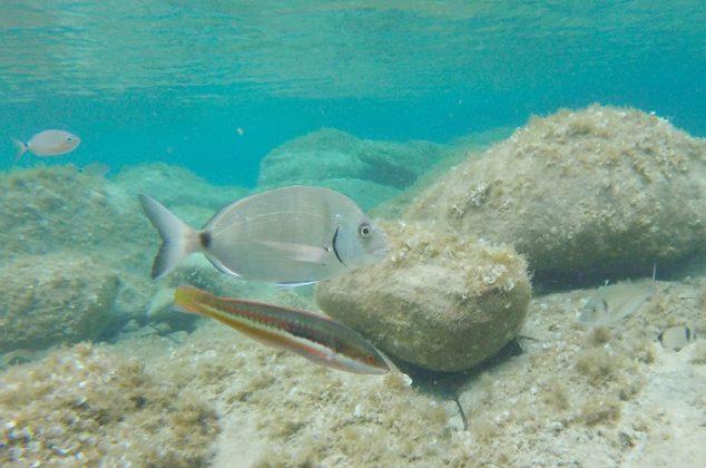 poissons iles lavezzi