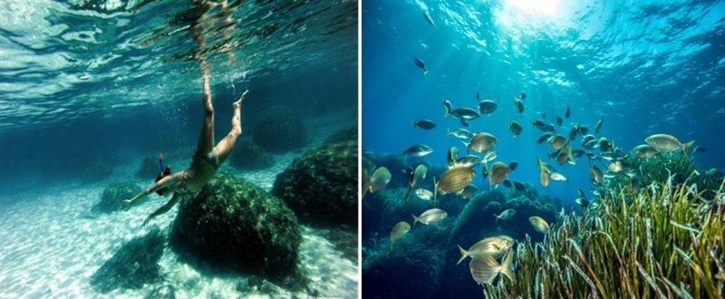 snorkeling lavezzi