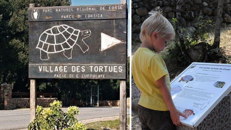 village des tortues corse