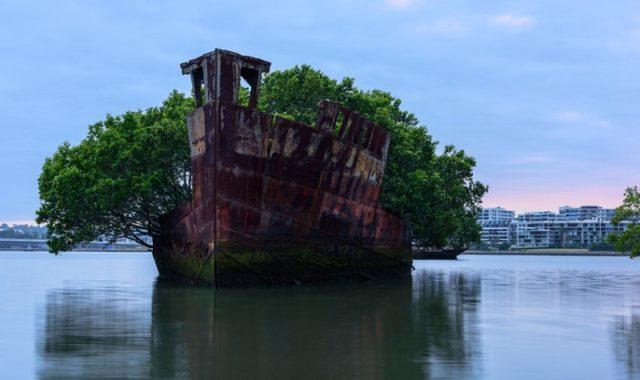 foret flottante homebush bay