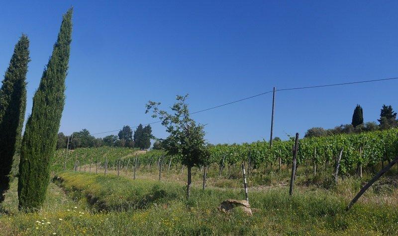 vignes leo ferre toscane
