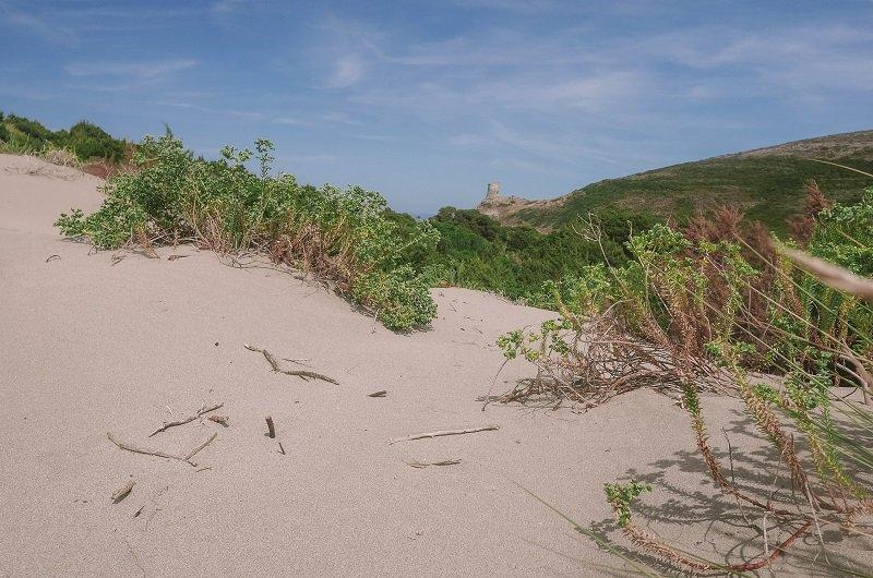 dune de sable barcaggio