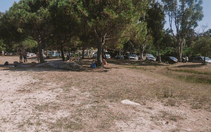 arbres plage de la roya