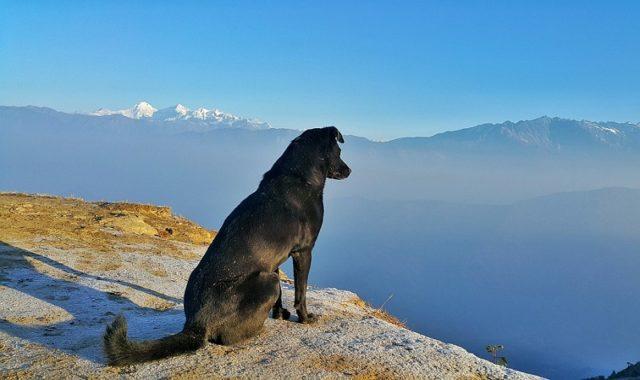 voyager à l'étranger avec son chien