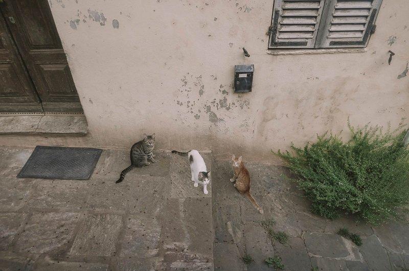 chats ruelle porticciolo