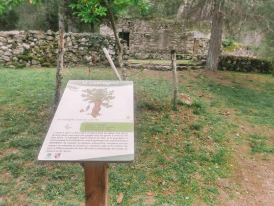 panneau sentier botanique restonica