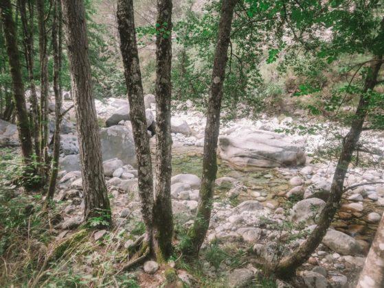 sentier botanique restonica
