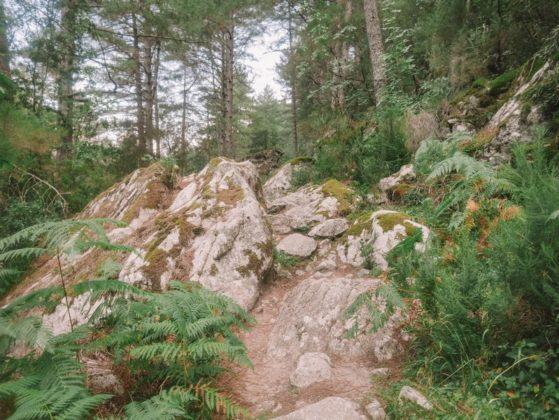 forêt restonica