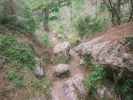 chemin de foret restonica