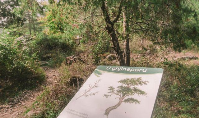 sentier botanique de la restonica