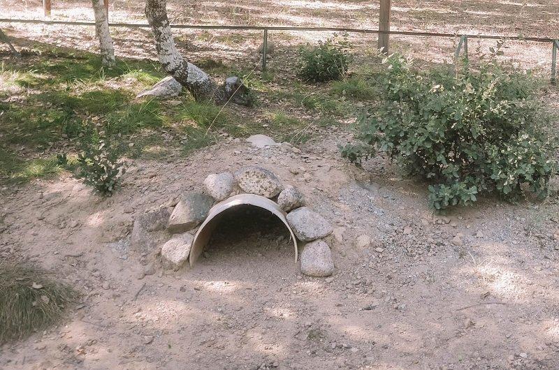 abri de tortue