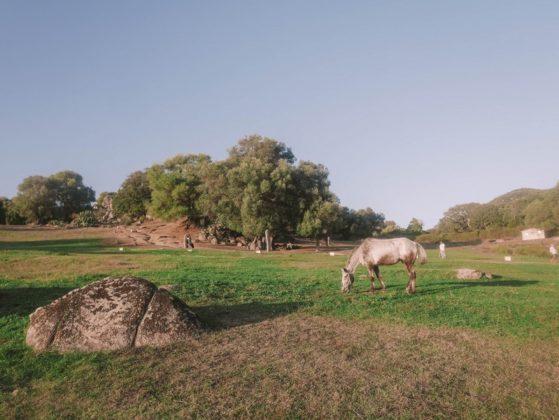 cheval filitosa