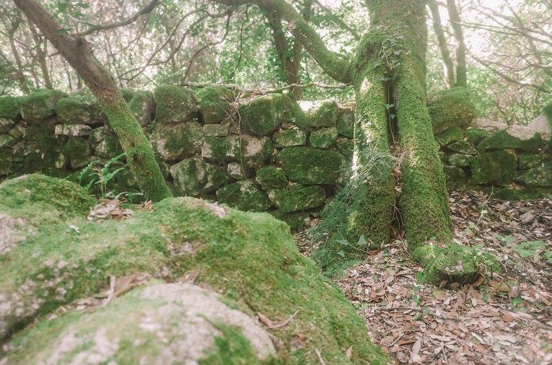 mousse sur les rochers