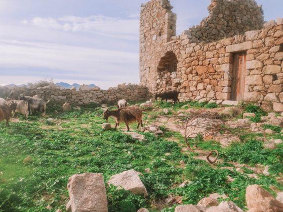 chèvre village occi