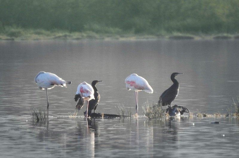 oiseaux etang biguglia