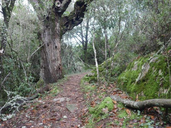 sentier de randonnée corse