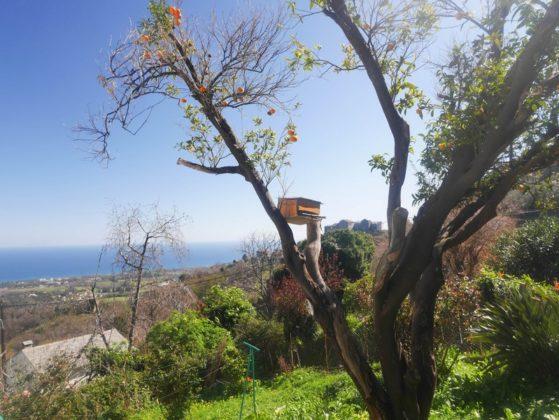 paysage san nicolao