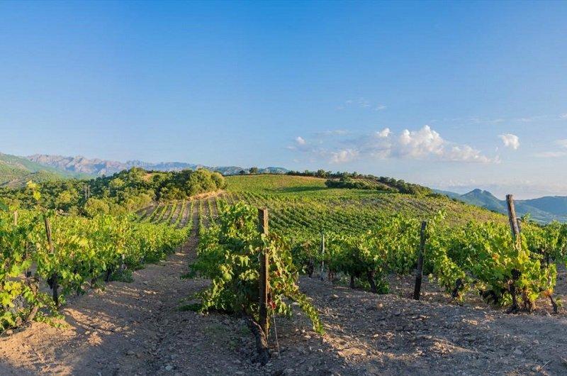 guide des vins en corse