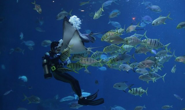 meilleurs sites de plongée dans les caraibes
