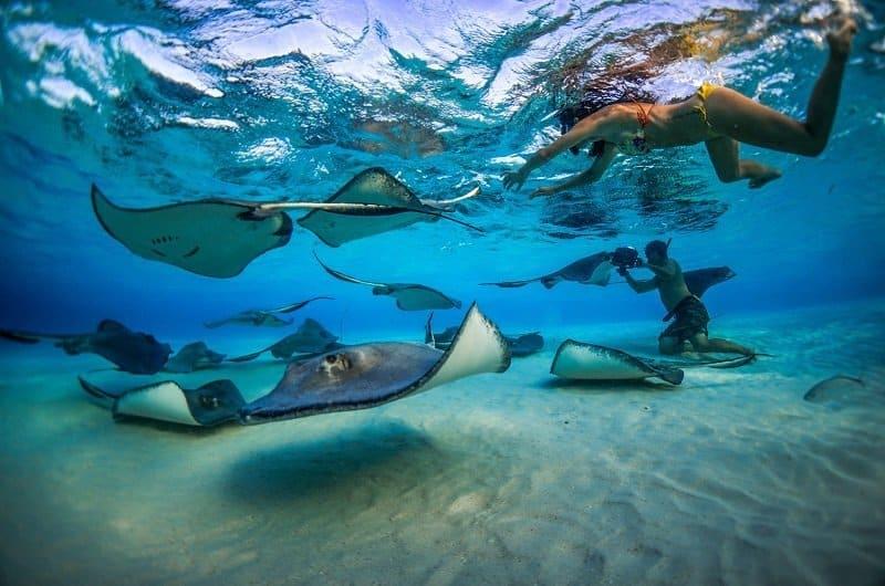 meilleurs spots de plongée dans les caraibes