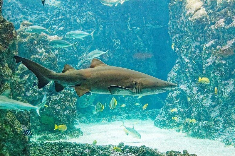 visites ouest bretagne aquarium