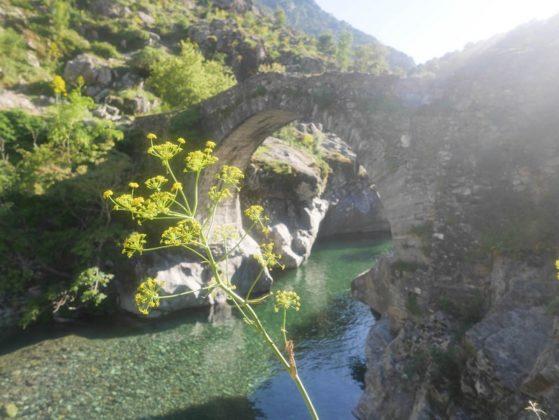 pont d'asco