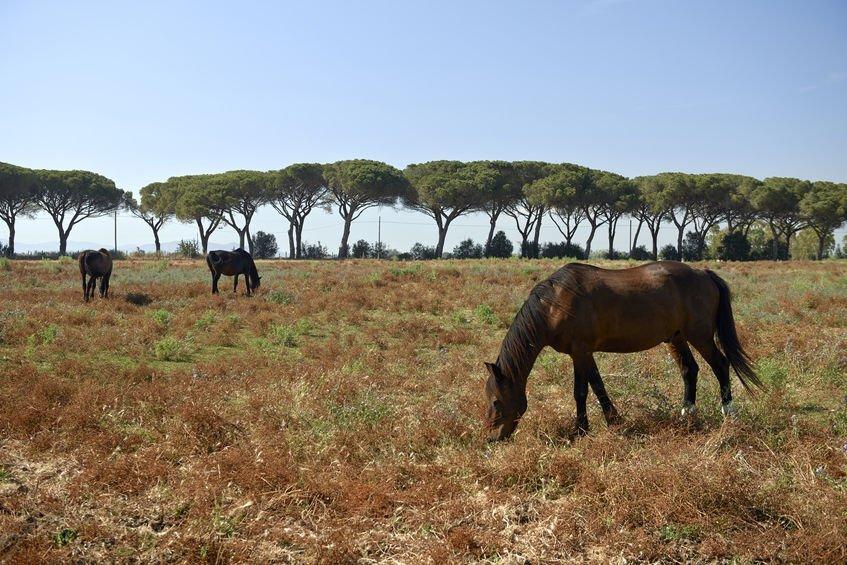 parc de la maremme chevaux