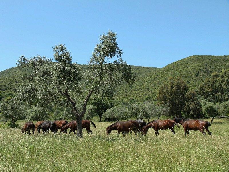 chevaux parc de la maremme