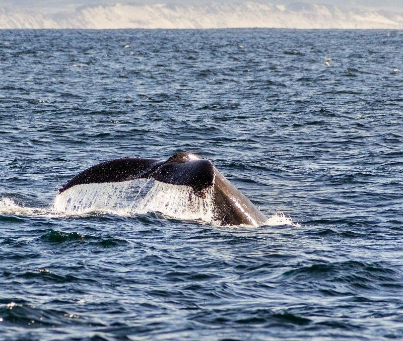 baleine baie de monterey