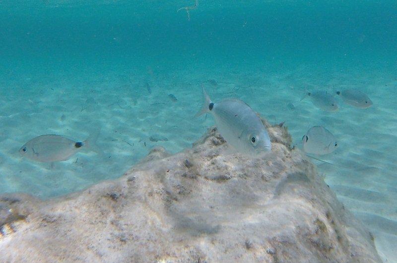 snorkeling grand sperone