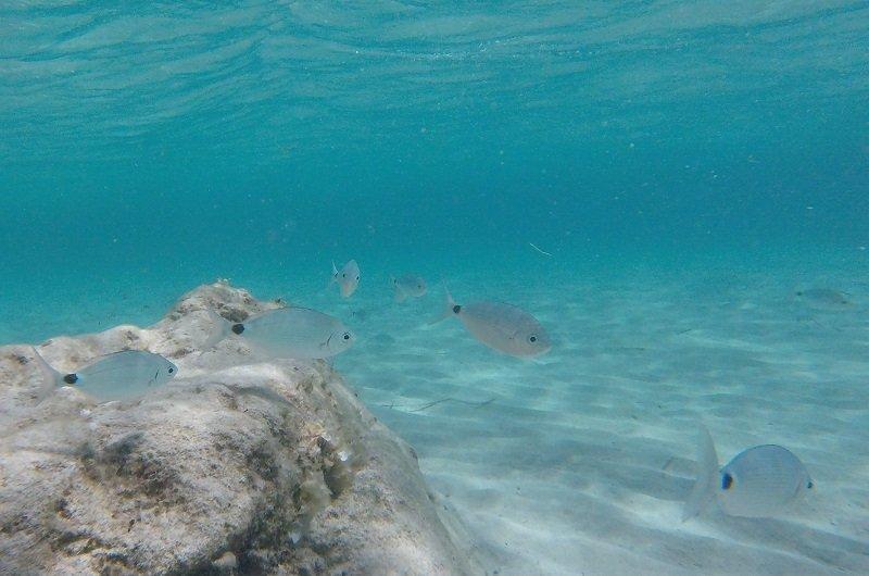 snorkeling sperone