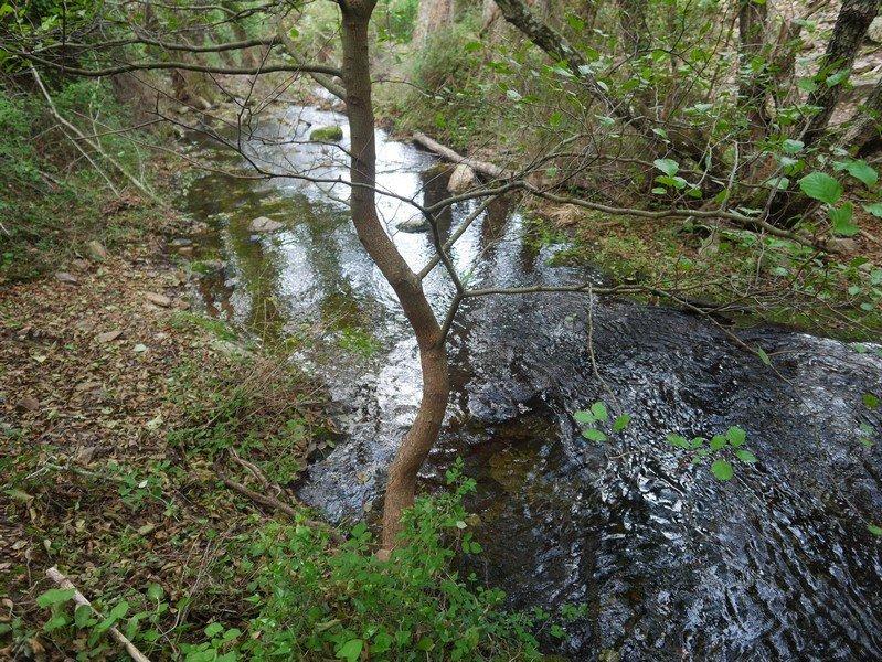 ruisseau Tavulaghjiu