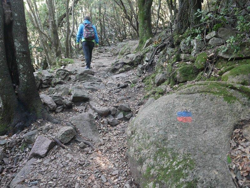 foret de bonifato randonnée