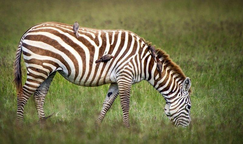 safari écoresponsable au Kenya