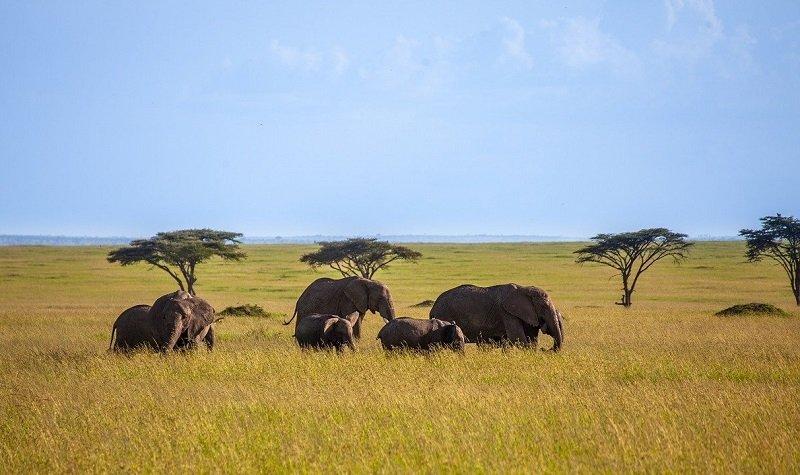 conseils pour voyager au kenya