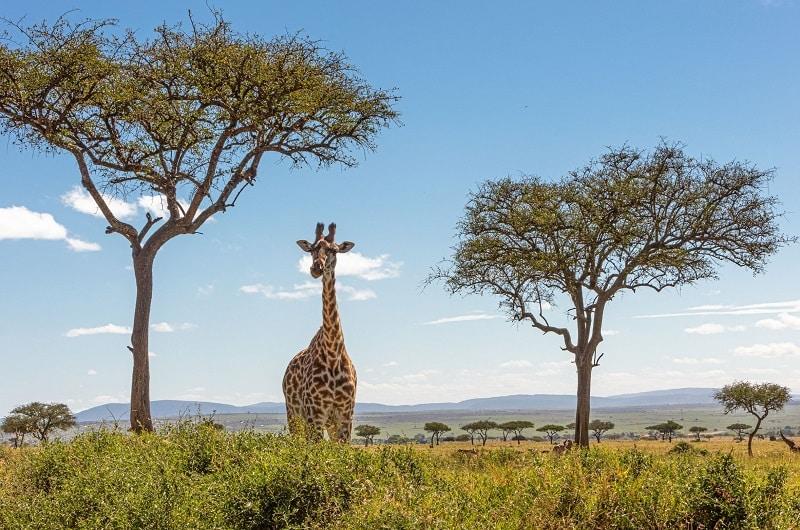 visiter la réserve du masai mara