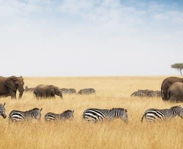 réserve du masai mara kenya