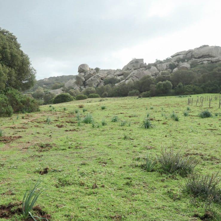 randonnée plateau de cauria
