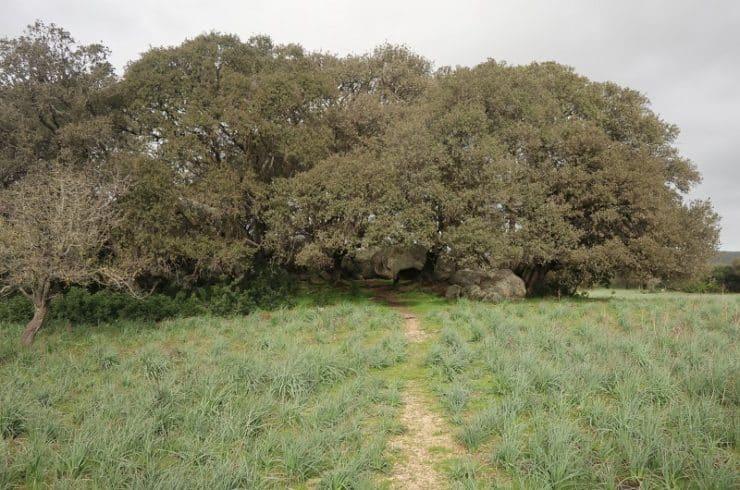 sentier randonnée cauria