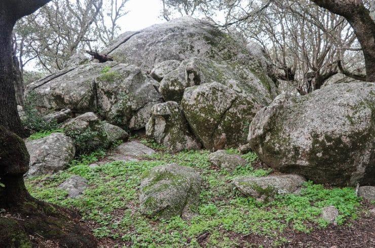 gros rocher