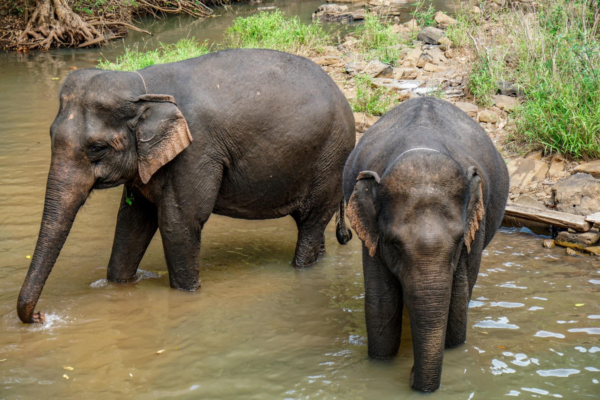 projet éléphants cambodge