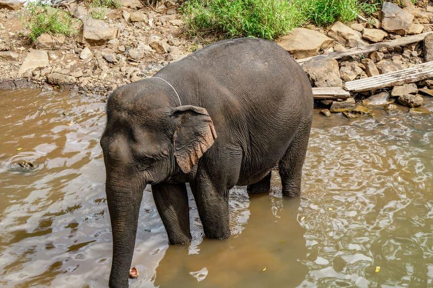 cambodge éléphant
