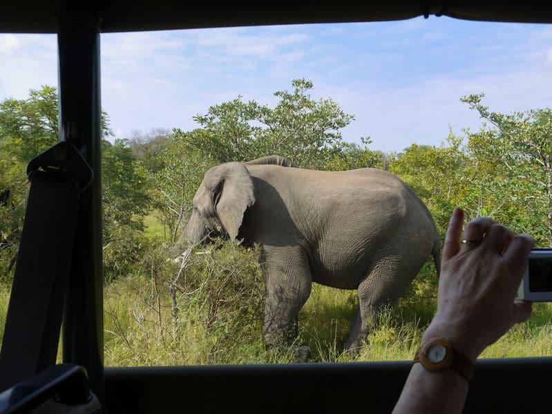 parc national kruger safari