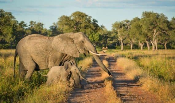 Parc national de Luangwa Sud
