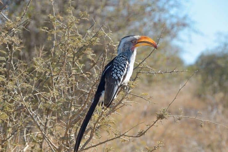 oiseau parc national kruger