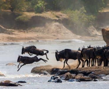 Voir la Grande Migration au Kenya et en Tanzanie